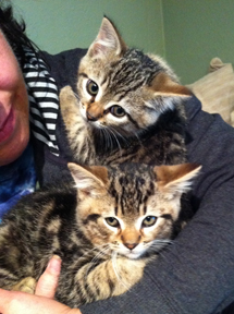 Is Hugging Two Kitties at once Twice as Good for You?